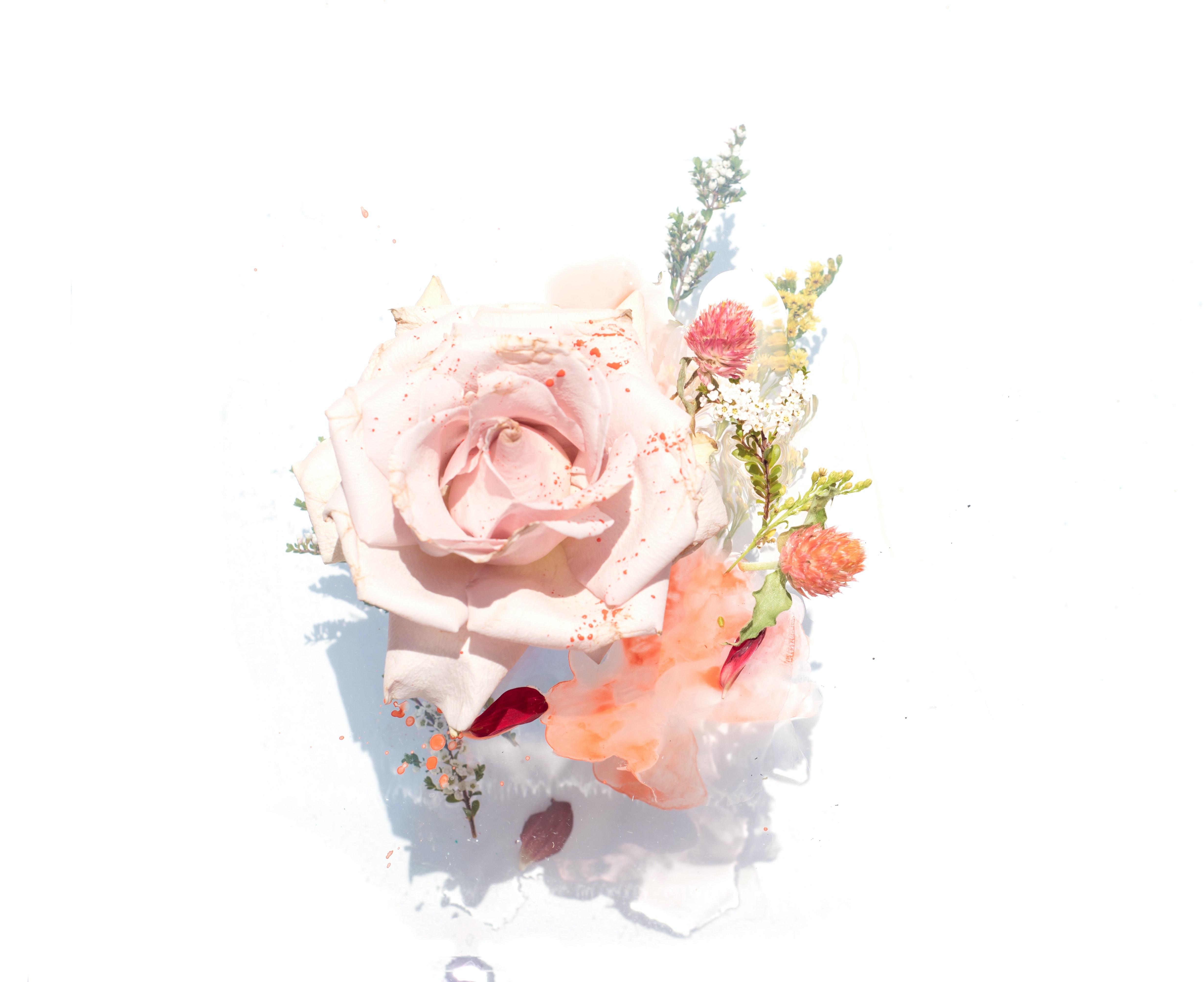 Quante Varietà Di Rose Esistono cosa mai ci sarà da dire sulle rose, penserà qualcuno