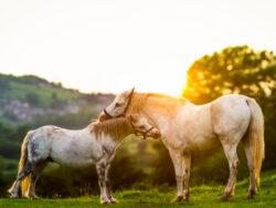 Cavalli e vegetazione in Sardegna