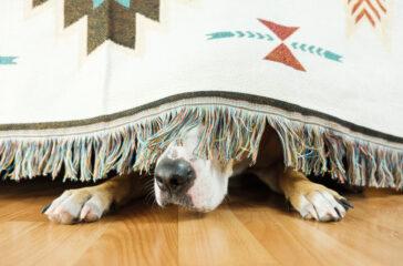 cane sotto il tappeto
