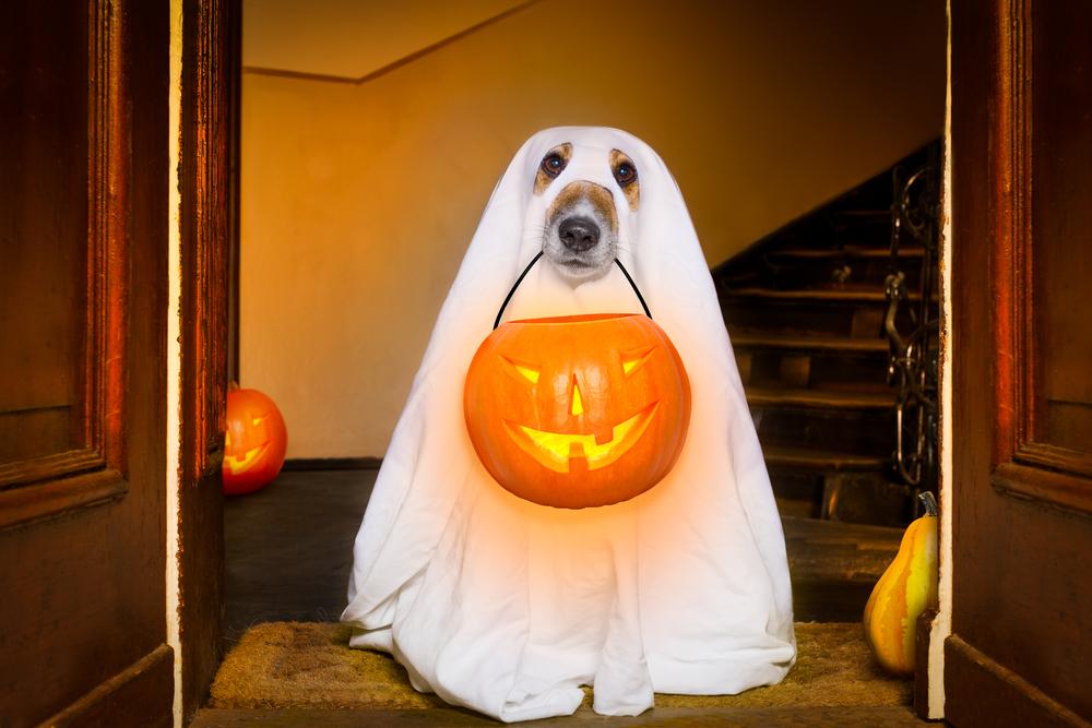 cane con zucca halloween