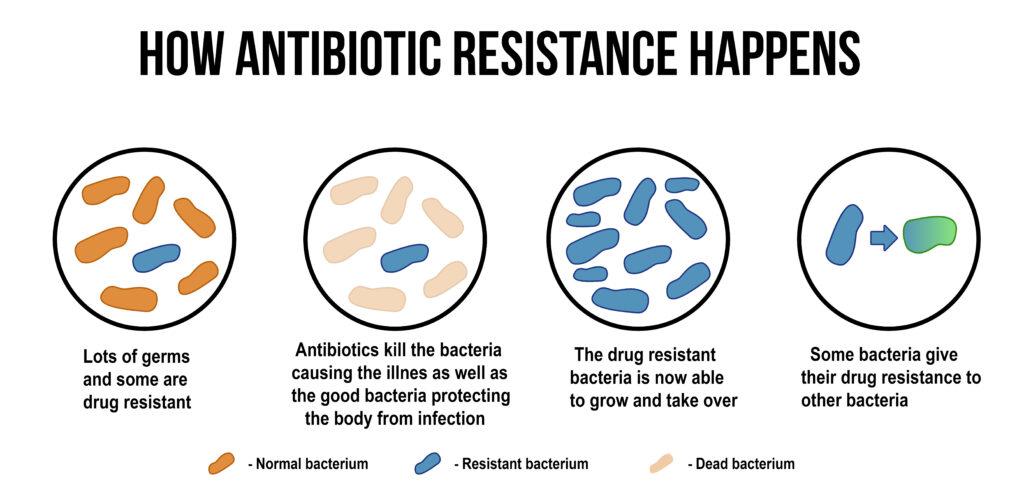fasi dell'antibiotico resistenza