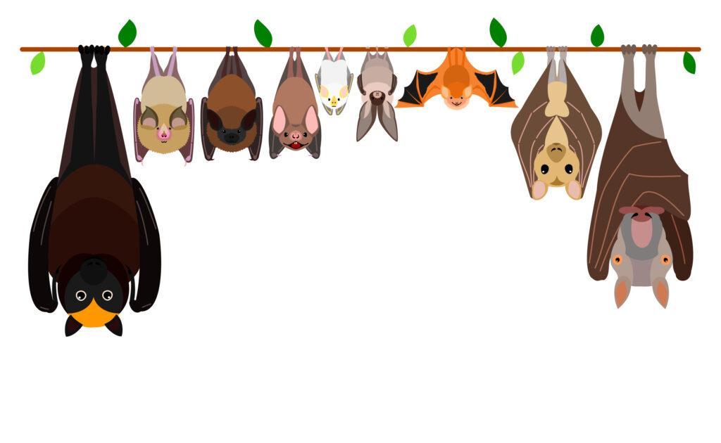 pipistrelli a testa in giù