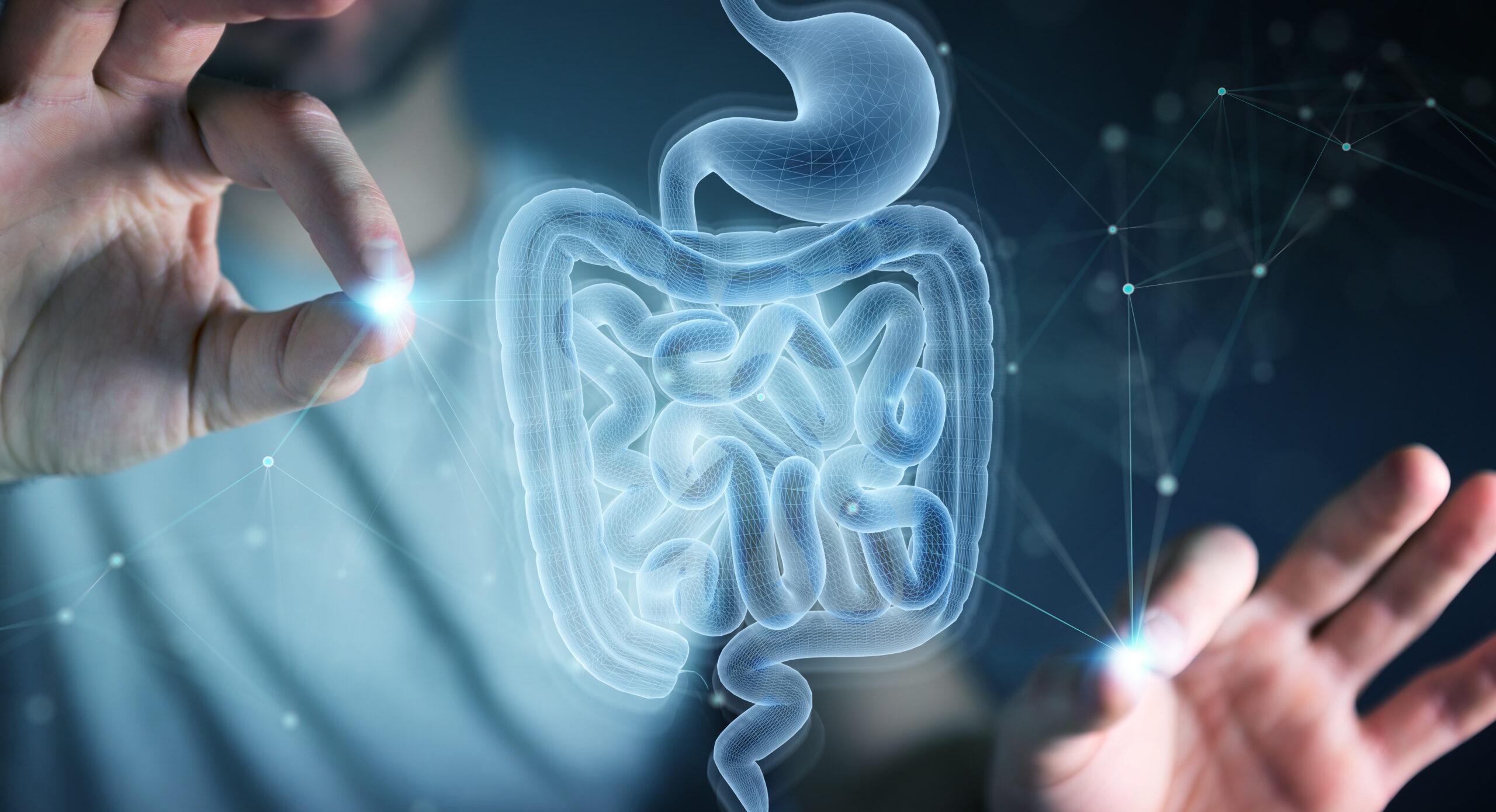 intestino 3D
