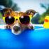 cane in piscina