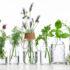 essenze aromaterapiche